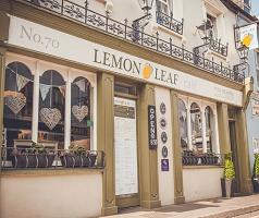 Lemon-Leaf-Kinsale