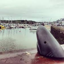 kinsale-sharks-pier